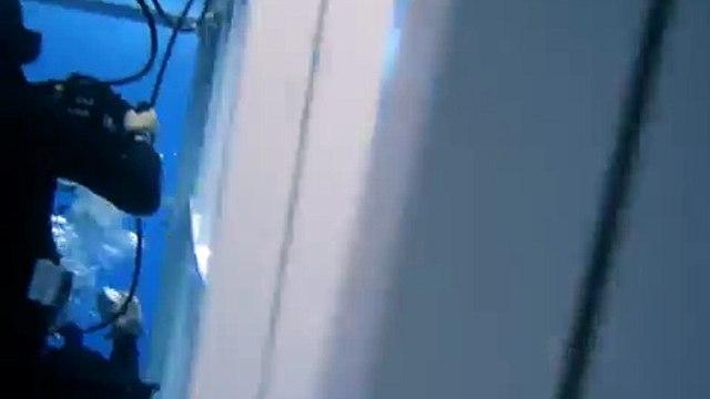 Great White Shark attacks bait rope