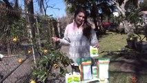 Fruit Trees 101 : Caring for Lemon Trees