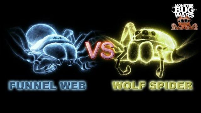MONSTER BUG WARS | Sydney Funnel Web Vs Wolf Spider