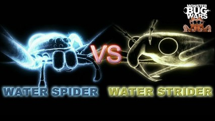 MONSTER BUG WARS | Water Spider Vs Water Strider