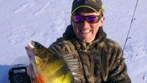 Icefishing Jumbo Perch