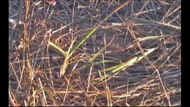 Holistic Management: The Soil Surface