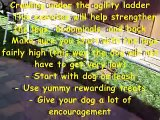 Dog Agility Training 'Tips' - Agility Ladder