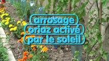 Des tomates BIO atteignent 4,49 mètres avec l'arrosage Bioclimatique ORIAZ !