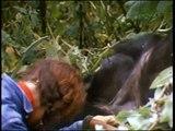 Dian Fossey, Digit's death