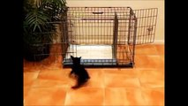 How To Potty Train A Briard Puppy - Briard House Training Tips - Housebreaking Briard Puppies