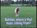 Fairytale Pony Farm Presents: Bruno And Bubbles