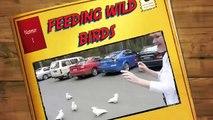 feeding wild cockatoos