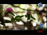 Disappeared 24th April 2015 Video Watch Online pt1