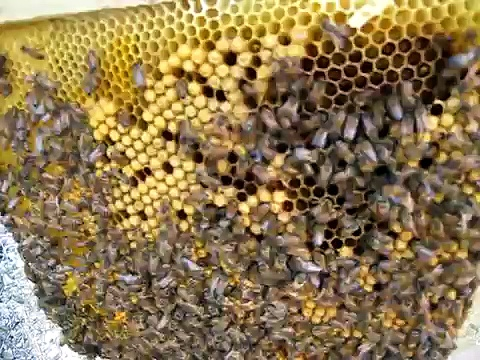 Learning Top Bar Hive Beekeeping – Comb managment 1/2