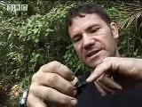 New animals species discovered - Expedition Borneo - BBC wildlife