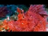 Scuba Diving Indonesia - Kungkungan Bay Resort (KBR) Lembeh Strait