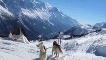 descente en yooner avec deux Huskies (46), près du Mont Blanc!