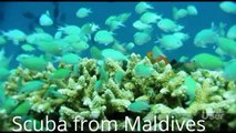 MALDIVE Travel and Tours, Maldive-Supper Slow 240P FS700 4K, BMPCC