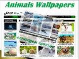 HD Wallpapers | Download New Desktop Full HD Wallpapers
