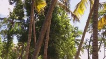 Vidéo Martinique: Plage des Salines ( Commune de Sainte-Anne en Martinique )