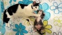 Maman chat surveille le sommeil de son chaton