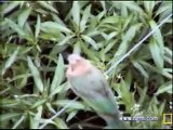 Fatty, Weavers & Nests, & Bee-eater 11/30/06