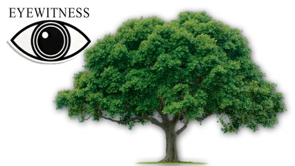 EYEWITNESS | Tree