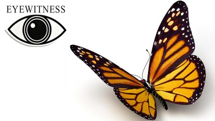 EYEWITNESS | Butterfly & Moth