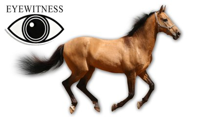 EYEWITNESS | Horse