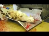 Abattoir Bovins France 2007 - L214