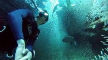 Nager entouré de millions de poissons : expérience incroyable