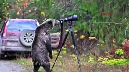 Meraklı ayının kamera şaşkınlığı