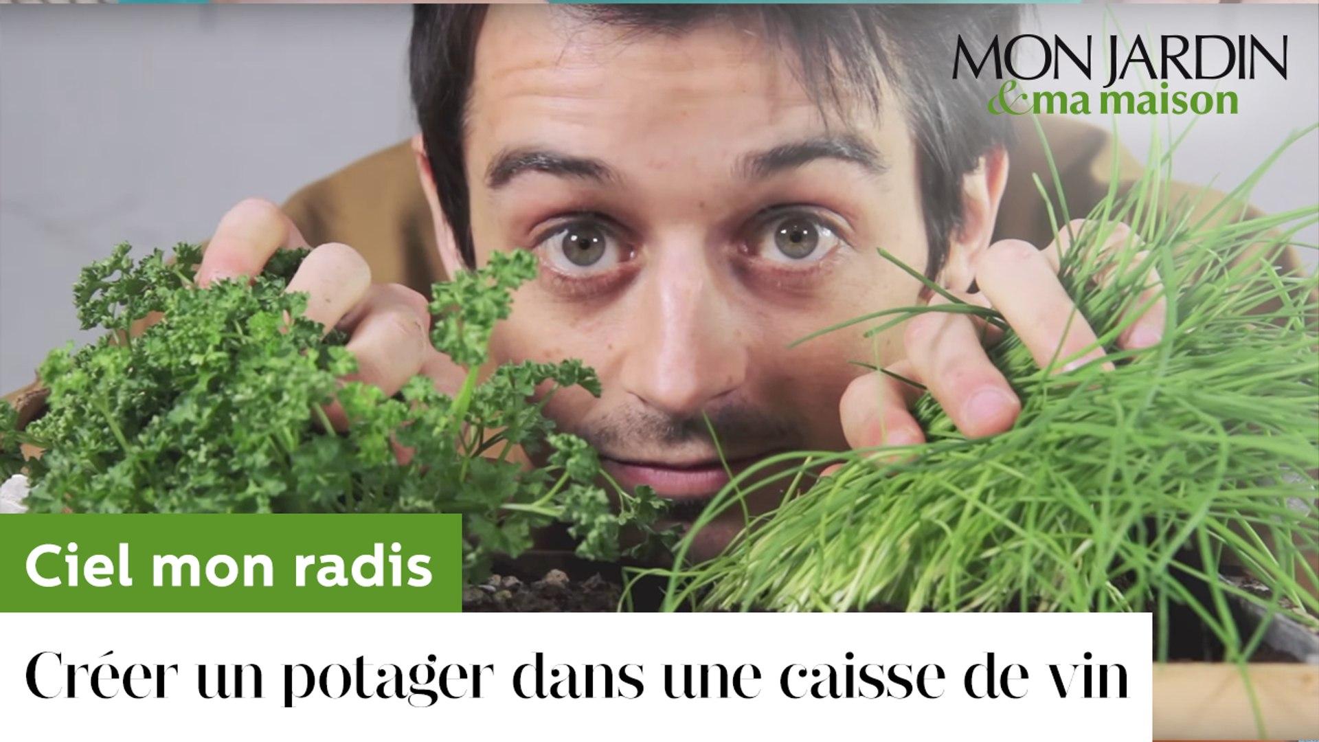 Planter Dans Une Caisse En Bois comment créer un potager dans une caisse de vin ?