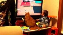 Chat et bébé   Les chats et les bébés de vidéos drôles 2015   Vidéos drôles de bébé 2015