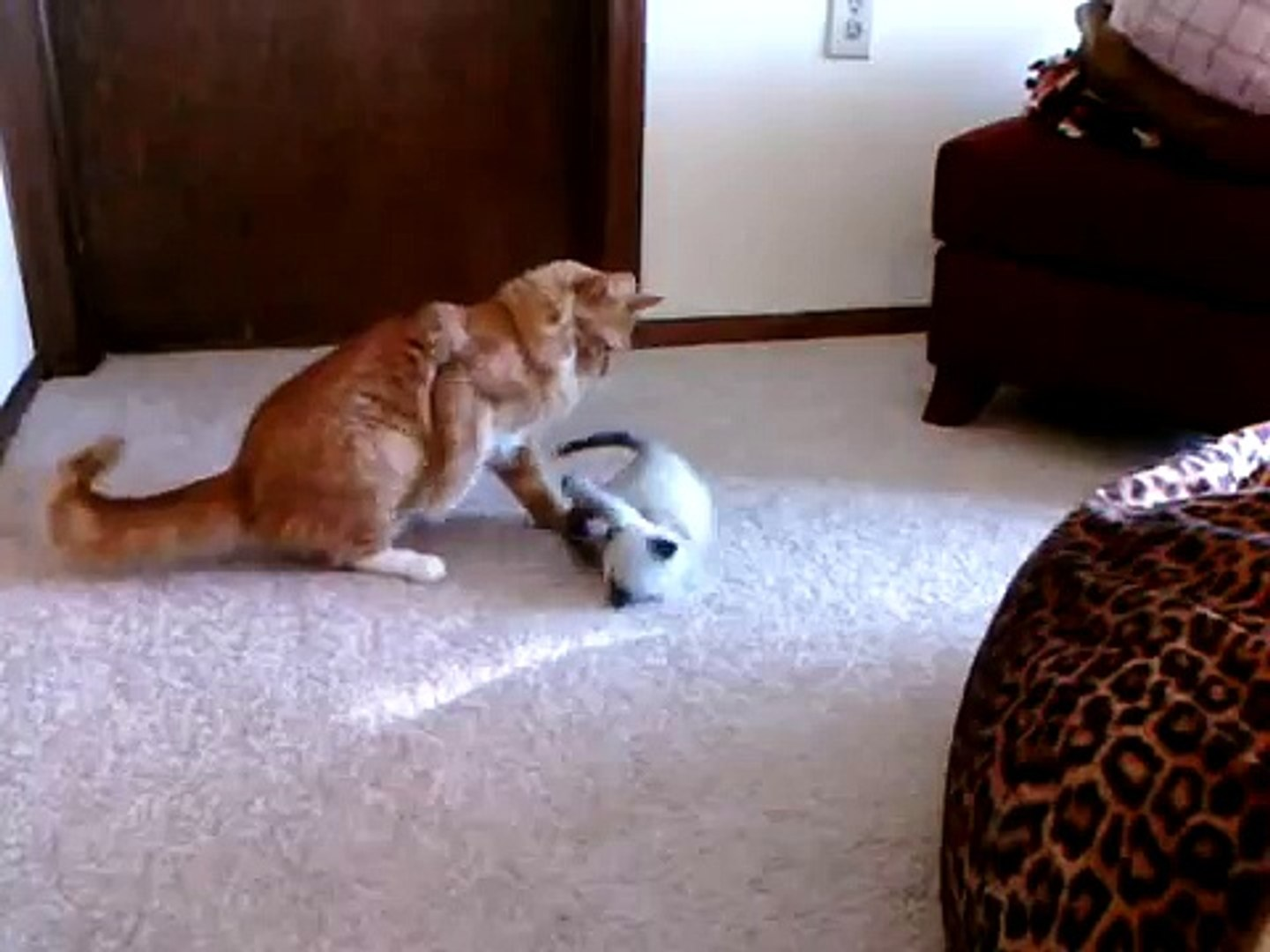 Real Life Garfield And Nermal Video Dailymotion