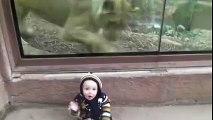 La naissance d'une grande amitié entre une lionne et un petit bébé 3