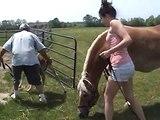 Horse running and Foal running