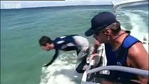 Tagging and surfing with a sea turtle!  Extreme animals - BBC wildlife