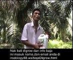Testimoni baja sawit digrow di Batu Pahat,Johor Pa