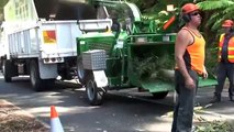 Tree Service Big Chipper Tree Removal and Tree Cutting Tree Video