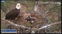 2015 03 12 Berry College Eagles:  Eaglets Misunderstanding