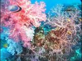 Similan Islands Liveaboard Diving Phuket Thailand - Liveaboard Burma