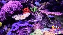 Copps Amazing Reef Tank