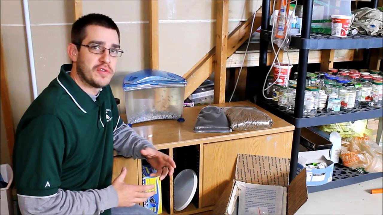 Aquaponics System Design – Selecting and Adding Fish