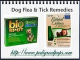 How do I deal with fleas? How to Get Rid of Fleas and Ticks