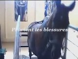 HORSE-TRAINER - appareil d'entraînement pour chevaux