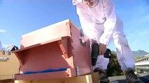 Installation de 400.000 abeilles noires à Aix-les-Bains