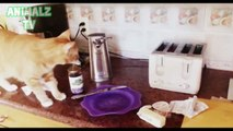 Funny Cats vs Toasters - Cats Scared of Toaster Compilation 2015 [NEW HD VIDEO]