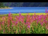 Alaska Marine Highway Adventure! Kodiak, Alaska; Homer, Alaska; https://youtu.be/XdlGUkmxKsU
