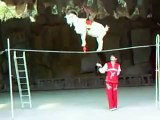 Just AmaaaazinG (goat n monkey in circus )...........Unbelieveable