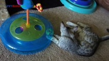 Best Cat Toys: List of top selling cat toys and Where to buy them