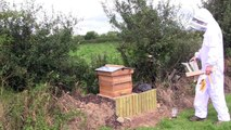 Irish Bees Hive inspection and removal of queen excluder Bee Keeping Beekeeping