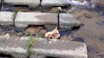 Un chien joue tout seul dans une rivière avec sa balle
