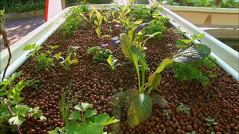 Aquaponics WA and Solar Energy